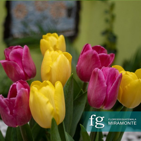 diseno floral con tulipanes flores de guatemala miramonte