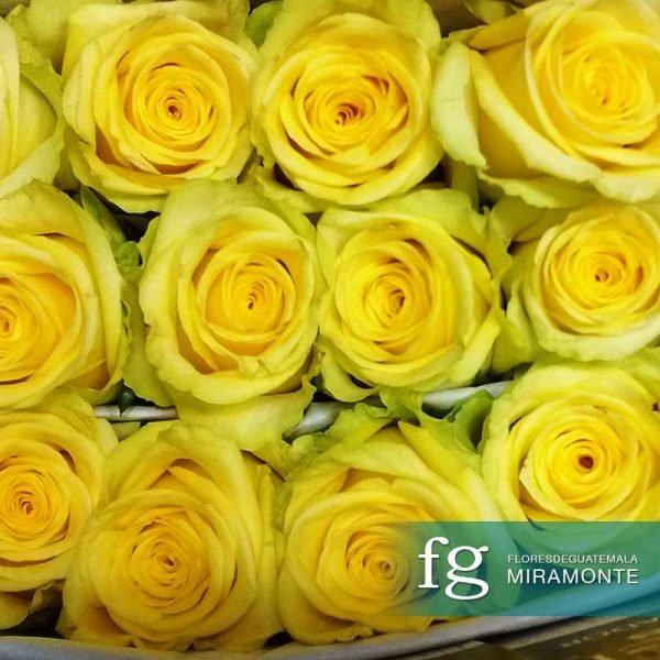 flores de guatemala rosas de ecuador